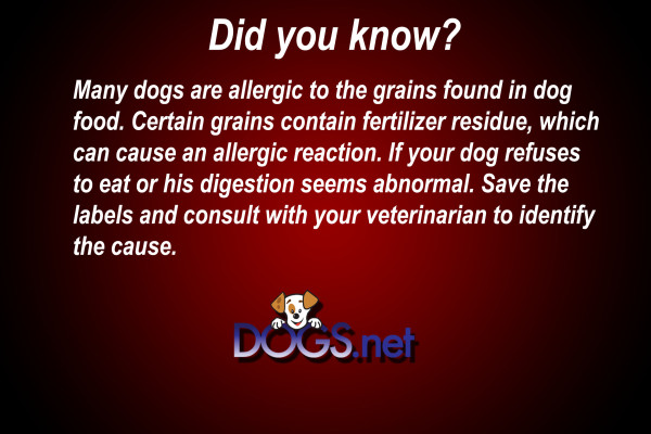 Many dogs Allergic to dog Food