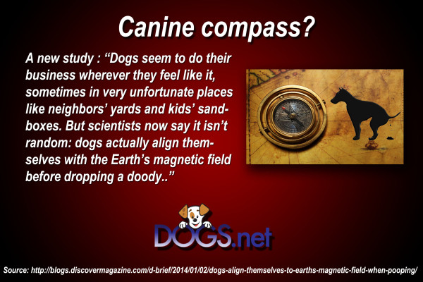 Canine Compass ?