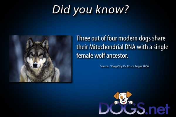 Did you know ? 3 or more dogs share..